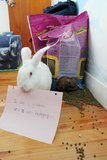 Bunnies Are Shamed