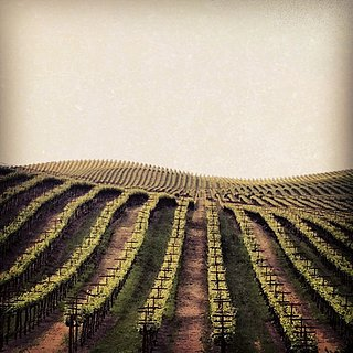 Travel Tips For Sonoma, California