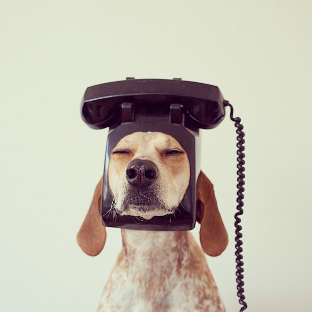 Coonhound Maddie's owner, Theron Humphrey, loves to take pictures of his pooch standing on or wearing random objects. It sounds silly, but his photography is gorgeous. Source: Instagram user thiswildidea