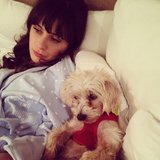 Zooey Deschanel shared this sweet snap while relaxing with her pup (and they're both wearing adorable pj's). Source: Instagram user zooeydeschanel