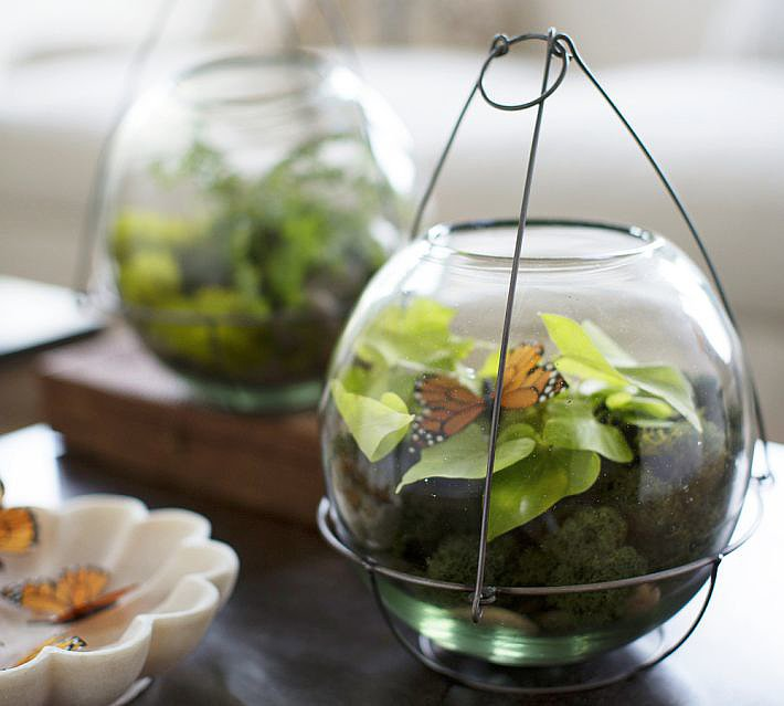 Use these glass terrariums ($49) as small outdoor planters, and then bring them inside to hold succulents well through the Winter.