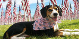 Celebrate the Fourth of July With Patriotic Pets