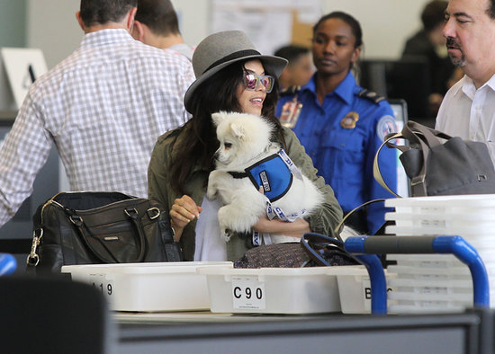Jenna Dewan traveled with her dog through LAX.