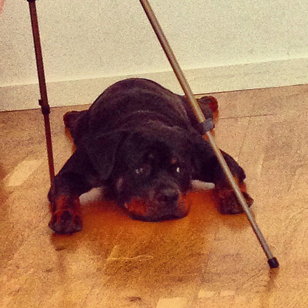 Mary Katrantzou's pup had a rough day. Source: Instagram user marykatrantzou