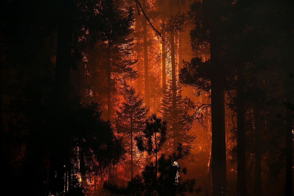 The Rim Fire consumed trees near Groveland, CA.
