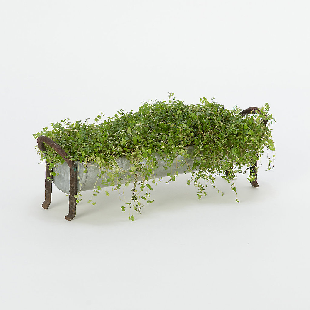 Bring the outdoors in, adding this tray planter ($48) to your windowsill.