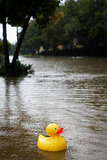 A rubber ducky made its way through the flooded streets.