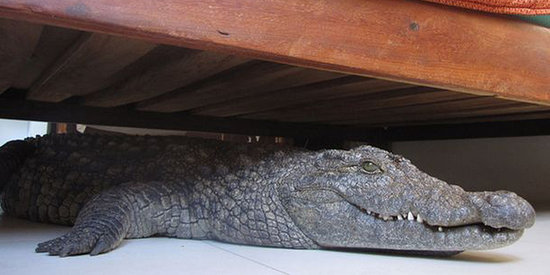 Man Sleeps 8 Hours With Crocodile Under His Bed