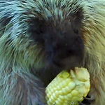 Talking Porcupine I Video