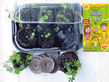 Tickle Me Plant Grow Kit