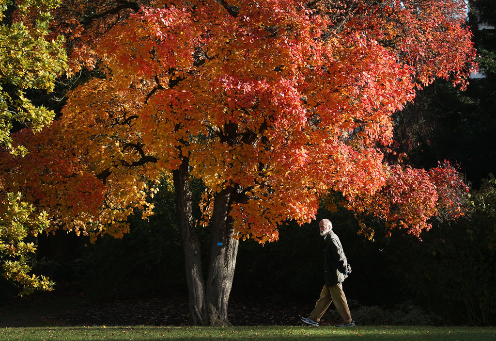 A man walked through the Royal Botanic Gardens in London.