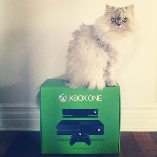 Xbox One Cat Pictures