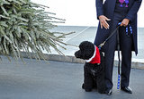 Sunny Obama inspected the White House Christmas tree.