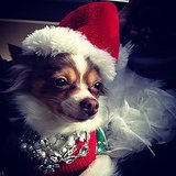 Festive Pup