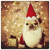 Cute Dogs in Santa Hats Pictures