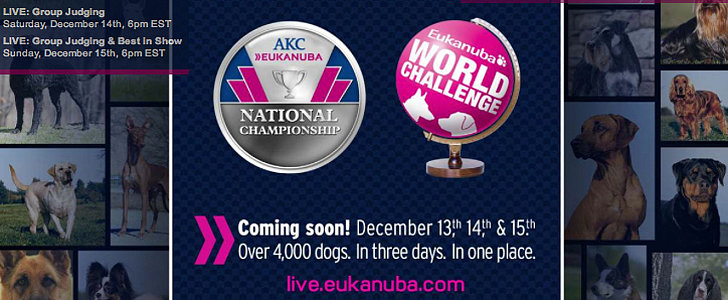 LIVE at the 2013 AKC/Eukanuba National Championship