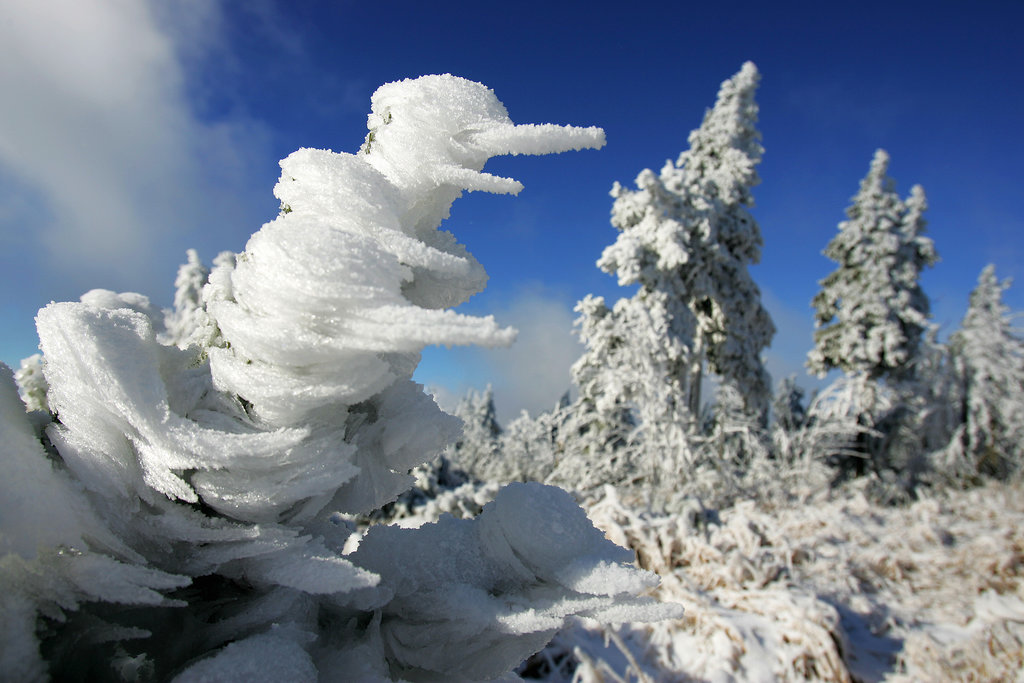The first snow left trees covered in Klínovec, Czech Republic.