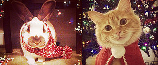 'Tis the Season! 10 Pictures of Pets Donning Holiday Garb