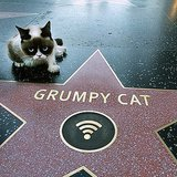 Famous Internet Animals