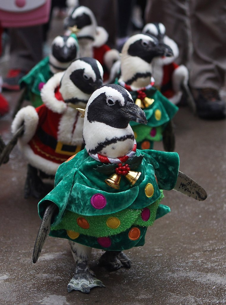 Penguins dressed up in holiday gear paraded through Everland, an amusement park in Yongin, South Korea.