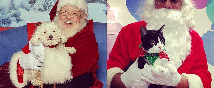 Happy Holidays! Pets Sitting on Santa's Lap