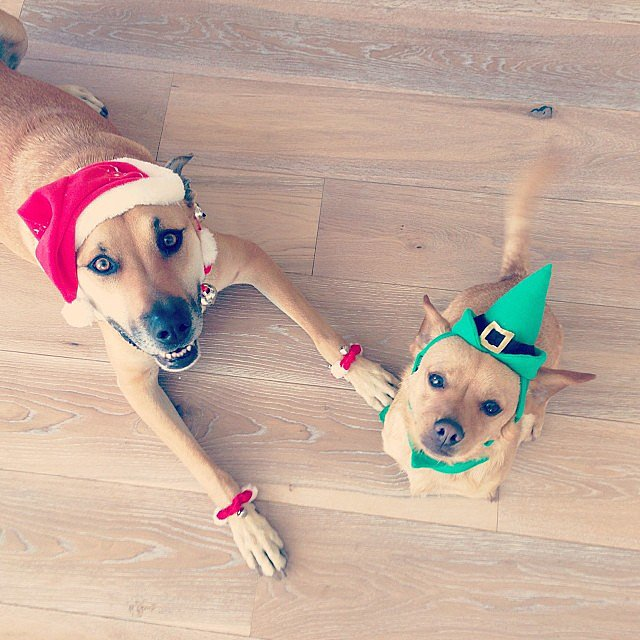 Lauren Conrad dressed up her dogs for the holiday. Source: Instagram user laurenconrad
