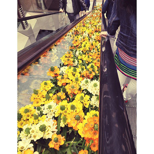 Even the escalators were feelin' the springtime love.