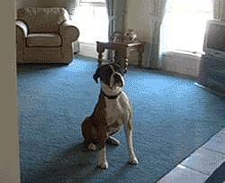 Overactive Dog