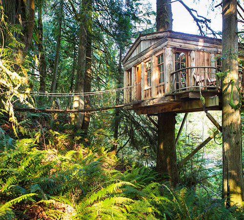 Spend a Night in a Tree House
