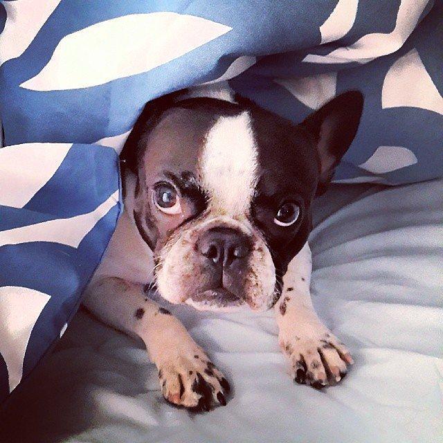 Snuggle Buddy