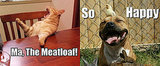 12 Animal Memes That Make Us LOL