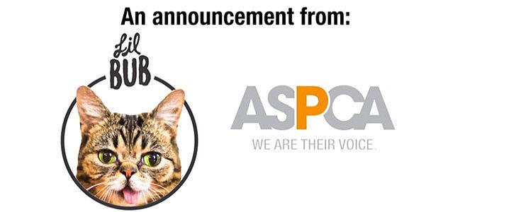 Lil Bub's Big Fund For the ASPCA