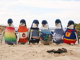 Australian Rescue Penguins in Need of Hand-Knit Sweaters