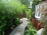 Grow a Lush Privacy Screen (10 photos)