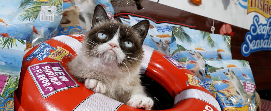 "Grumpy Cat's Tips For Staying True to Yourself: ""Never Start Caring"""