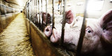 9 Facts About Factory Farming That Will Break Your Heart (GRAPHIC PHOTOS)