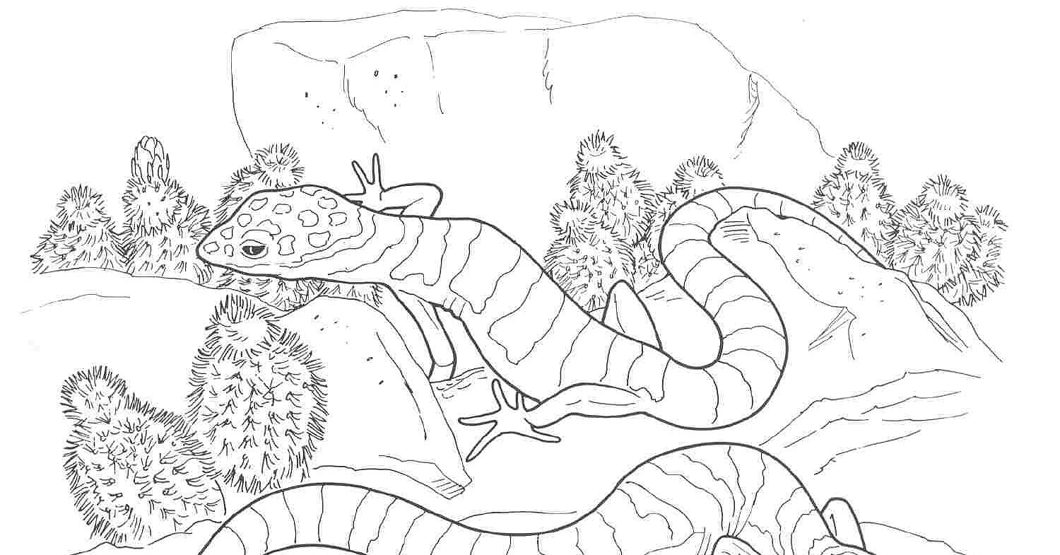 Free Coloring Pages Desert Animals : Colouring desert animals coloring page