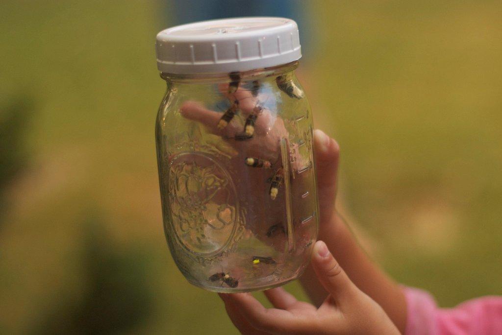 Catch Fireflies