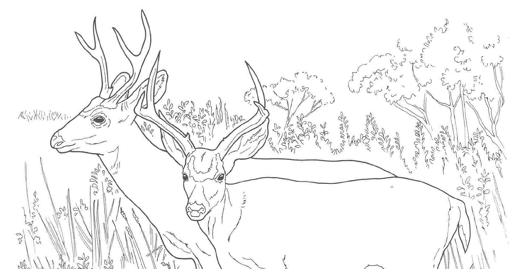 Coloring pages deer - Running Deer Coloring Page Pages