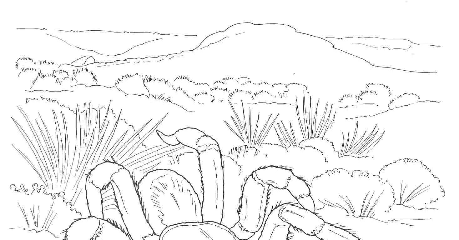desert landscape coloring pages printable - photo#12