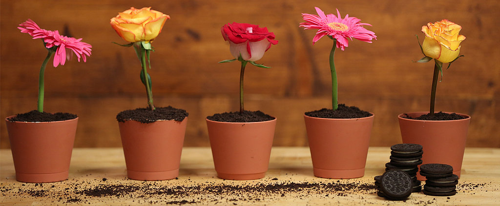 These Flowerpot Cakes Will Make Dinner-Party Guests Do a Double Take