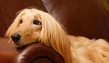 10 Breeds for Experienced Dog Owners