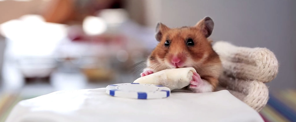 Watch a Hamster Gobble Many a Tiny Burrito