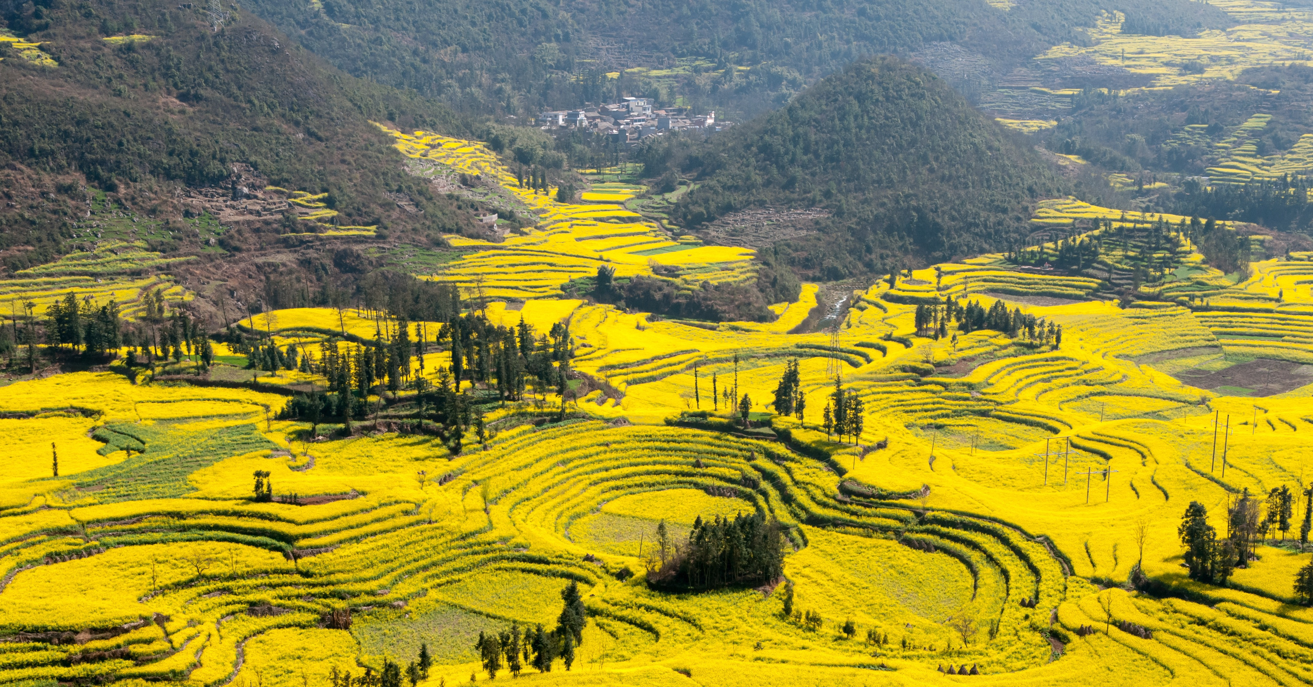 Canola Flower Fields China 83 Unreal Places You Thought