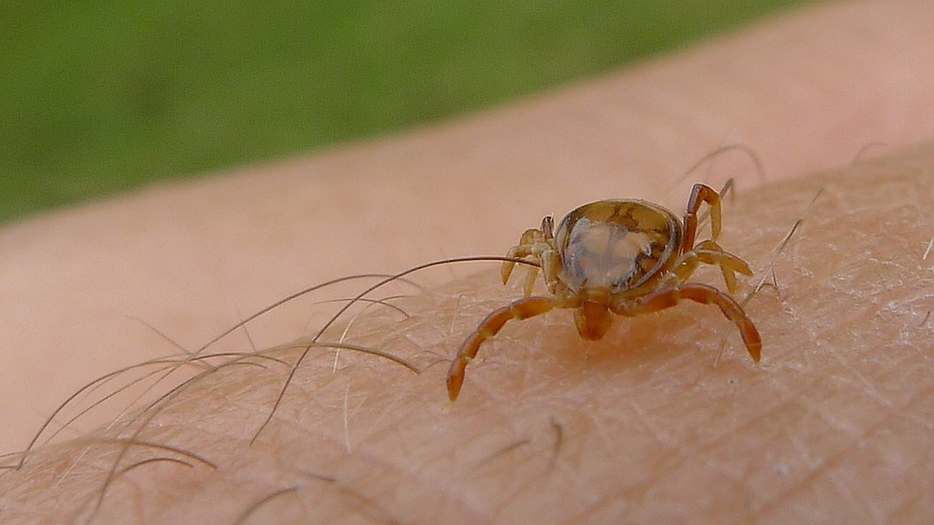 How to Keep Your Child Safe From Summertime Ticks