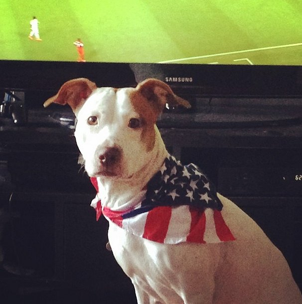 There's no question who this Pitbull is rooting for during this game. Source: Instagram user breezy1884