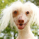 It's National Nude Day -- We Celebrate With Hairless Dogs!