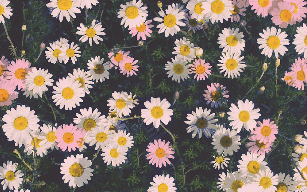 23 Chic iPhone Wallpapers That Don't Cost a Thing