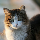 "Really? Australia Plans to Kill Feral Cats With ""Curiosity"" Poison"