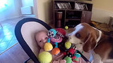 The Daily Squee: Beagle Steals Baby's Toy, Tries To Apologize